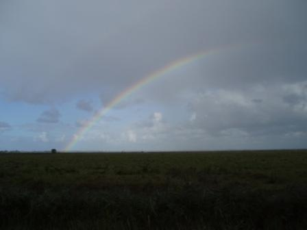 A rainbow over the marshes